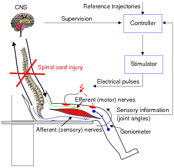 Controlled Functional Electric Stimulation For